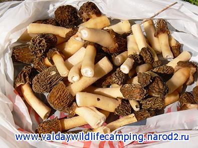 весенние грибы, грибы весной, строчки фото, сморчки фото