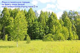 природа валдая,  леса валдая, парковка на валдае в лесу, лесной кемпинг валдай,